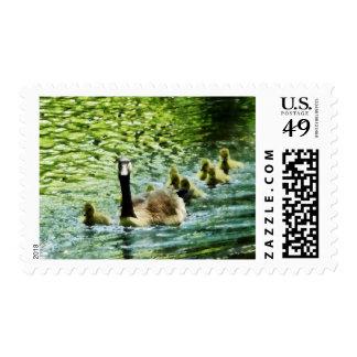 Familia del ganso timbre postal