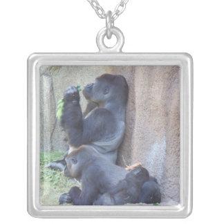 Familia del gorila collar plateado