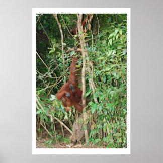 Familia del jabalí y del mono póster