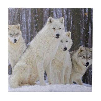 Familia del lobo azulejo cuadrado pequeño