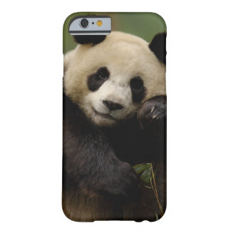 Familia del melanoleuca del Ailuropoda de la panda Funda Para iPhone 6 Barely There