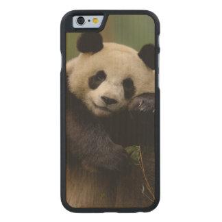 Familia del melanoleuca del Ailuropoda de la panda Funda De iPhone 6 Carved® Slim De Arce