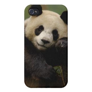 Familia del melanoleuca del Ailuropoda de la panda iPhone 4 Fundas