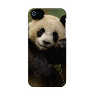 Familia del melanoleuca del Ailuropoda de la panda Funda Para iPhone 5 Incipio Feather Shine