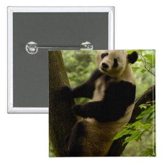 Familia del melanoleuca del Ailuropoda de la panda Pin Cuadrada 5 Cm