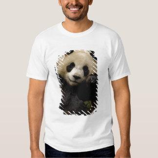 Familia del melanoleuca del Ailuropoda de la panda Remeras