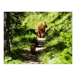 Familia del oso de Brown Tarjeta Postal