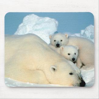 Familia del oso polar alfombrillas de ratones