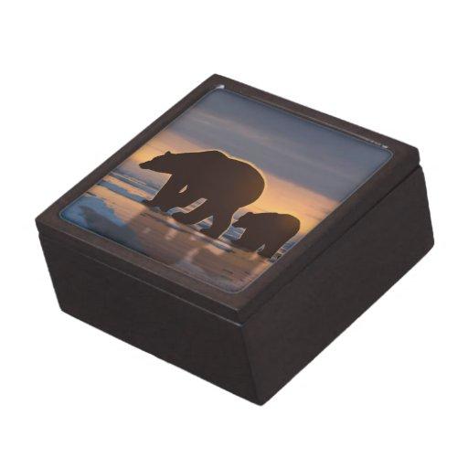 Familia del oso polar cajas de recuerdo de calidad