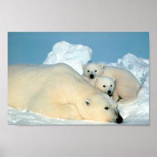 Familia del oso polar póster