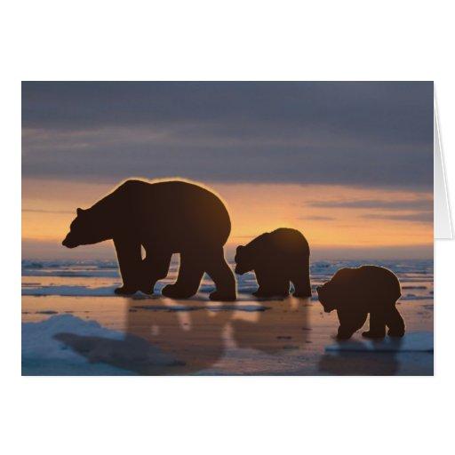 Familia del oso polar tarjetas