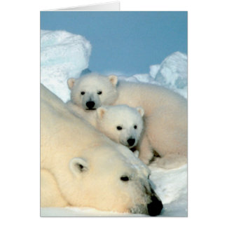 Familia del oso polar tarjeta de felicitación