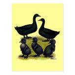 Familia del pato del Cayuga Postales