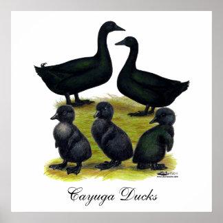 Familia del pato del Cayuga Póster