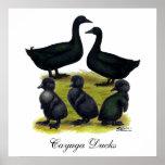 Familia del pato del Cayuga Posters
