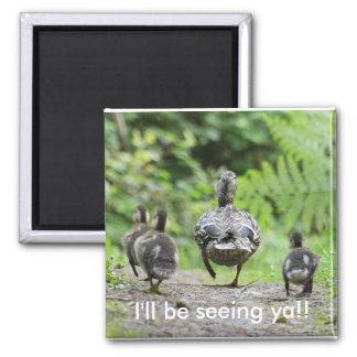 Familia del pato imán cuadrado