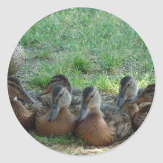 Familia del pato pegatina redonda