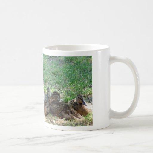 Familia del pato taza de café