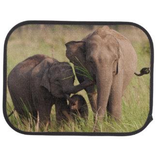 Familia india del elefante asiático en la sabana alfombrilla de coche