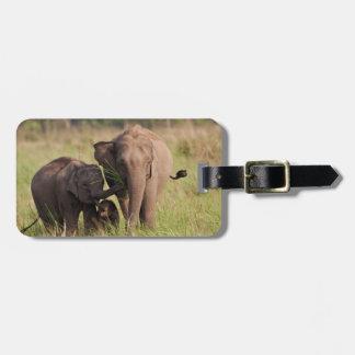 Familia india del elefante asiático en la sabana etiquetas bolsas