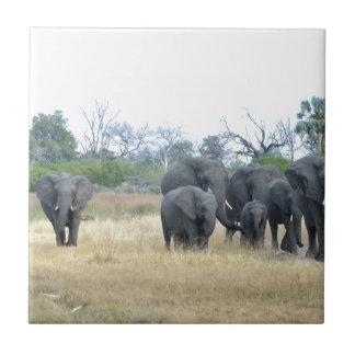 Familia Tom Wurl.jpg del elefante Azulejo Cuadrado Pequeño