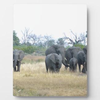 Familia Tom Wurl.jpg del elefante Placa Para Mostrar