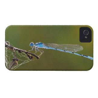 Familiar Bluet, Enallagma civile, male with dew, Case-Mate iPhone 4 Case