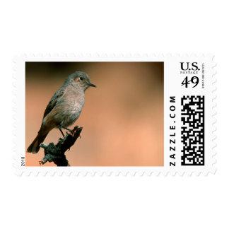 Familiar Chat (Cercomela Familiaris) On Twig Postage