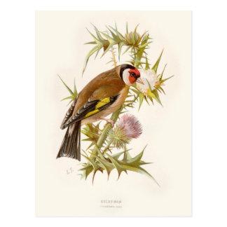Familiar Wild Birds Swaysland Goldfinch Postales