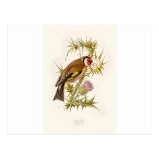 Familiar Wild Birds Swaysland Goldfinch Tarjetas Postales
