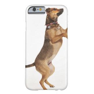 Familiaris 2 del Canis Funda De iPhone 6 Barely There