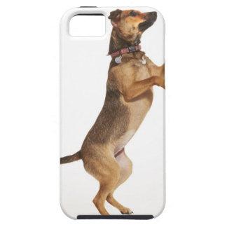 Familiaris 2 del Canis iPhone 5 Funda