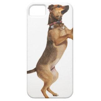 Familiaris 2 del Canis iPhone 5 Fundas