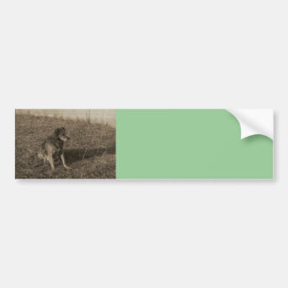 Family Dog Bumper Sticker