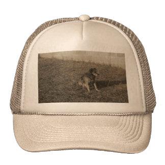 Family Dog Trucker Hats