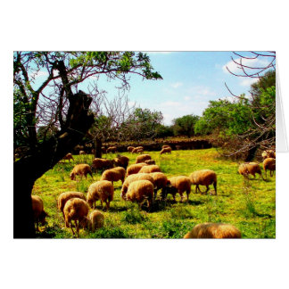 Family love peace joy idyll sheep flock card