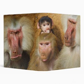Family of Baboons Papio Hamadryas Cologne Zoo 3 Ring Binder