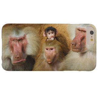 Family of Baboons Papio Hamadryas Cologne Zoo Barely There iPhone 6 Plus Case