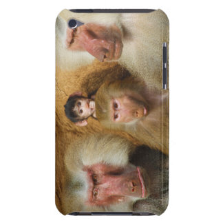 Family of Baboons Papio Hamadryas Cologne Zoo Barely There iPod Case