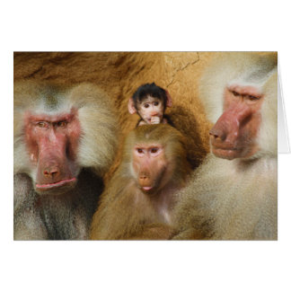 Family of Baboons Papio Hamadryas Cologne Zoo Greeting Card