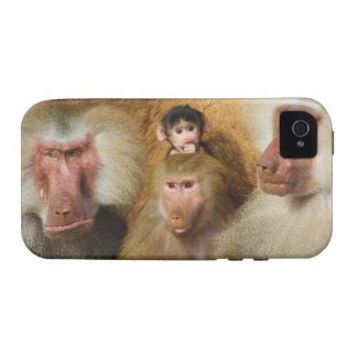 Family of Baboons Papio Hamadryas Cologne Zoo Case-Mate iPhone 4 Case