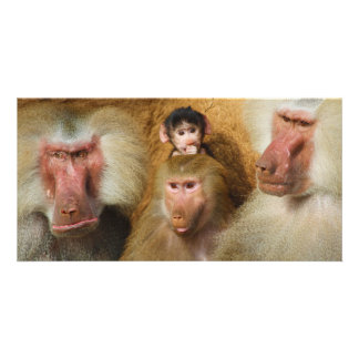 Family of Baboons Papio Hamadryas Cologne Zoo Photo Greeting Card