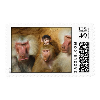 Family of Baboons Papio Hamadryas Cologne Zoo Postage Stamp