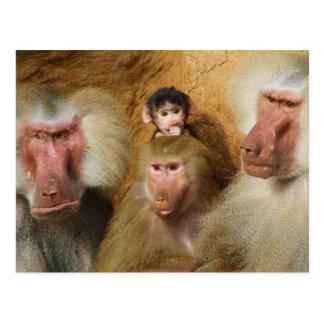 Family of Baboons Papio Hamadryas Cologne Zoo Postcard