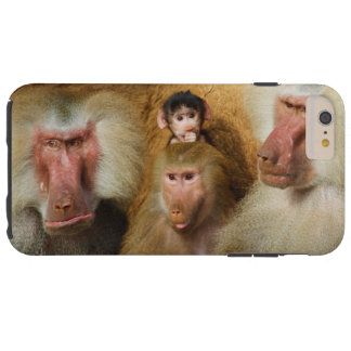 Family of Baboons Papio Hamadryas Cologne Zoo Tough iPhone 6 Plus Case