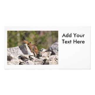 Family of Chipmunks Photo Greeting Card