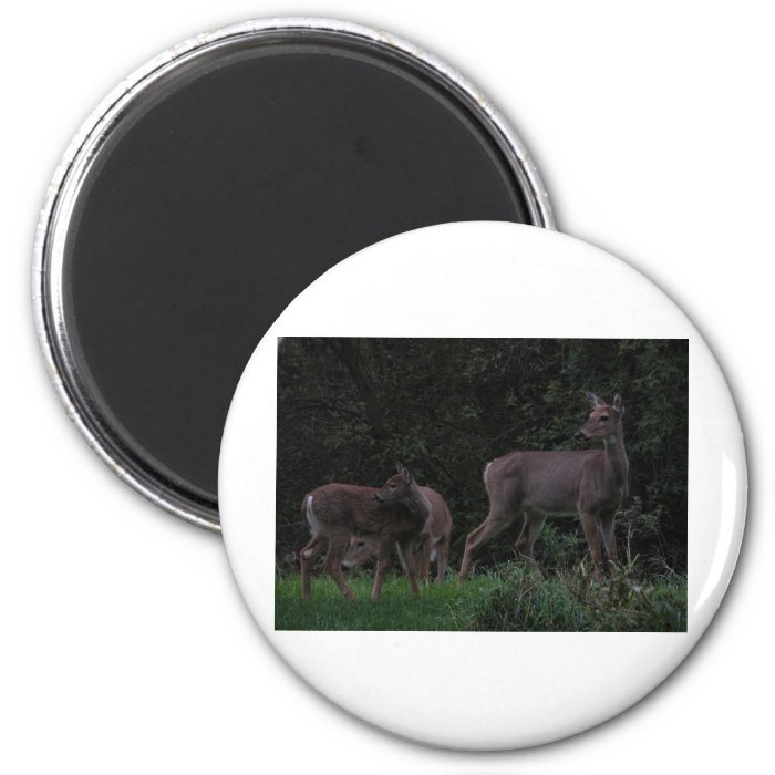 Family of Deer 2 Inch Round Magnet