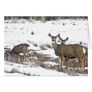 Family of Deer Card