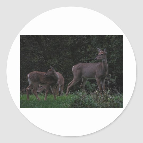 Family of Deer Classic Round Sticker
