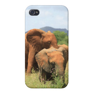 Family of elephants iPhone 4/4S cover